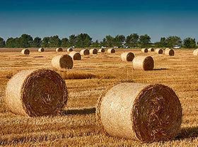 Síntesis de biomasa